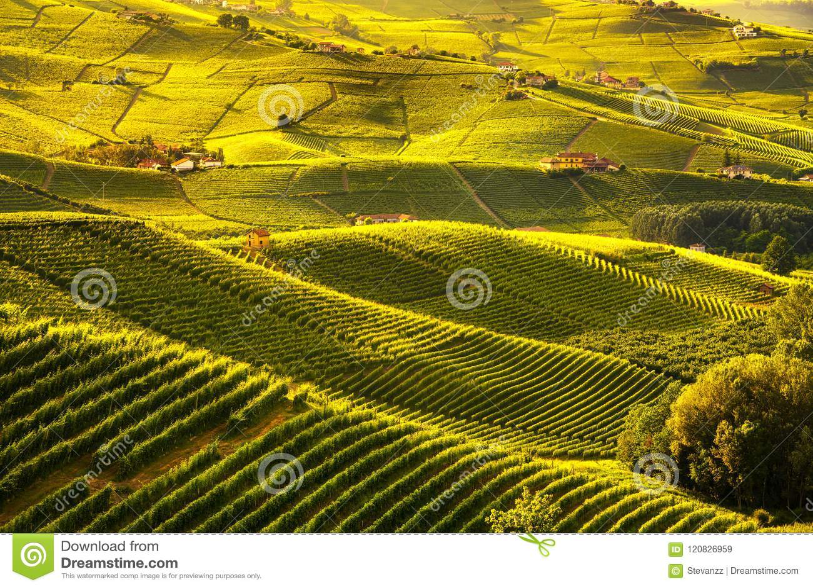 Langhe vineyards sunset panorama, Barolo, Piedmont, Italy Europe