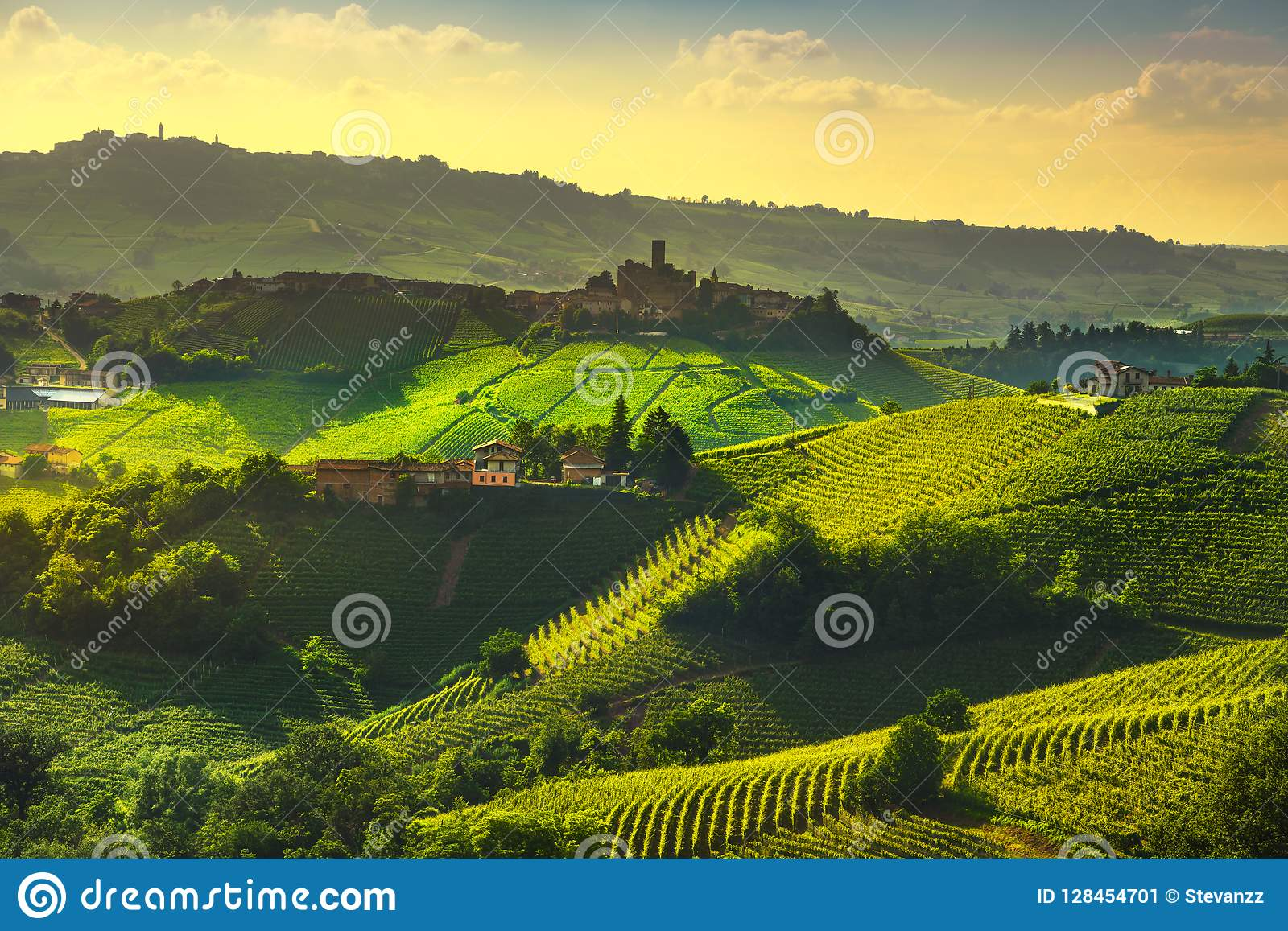 Langhe Vineyards View, Castiglione Falletto And La Morra