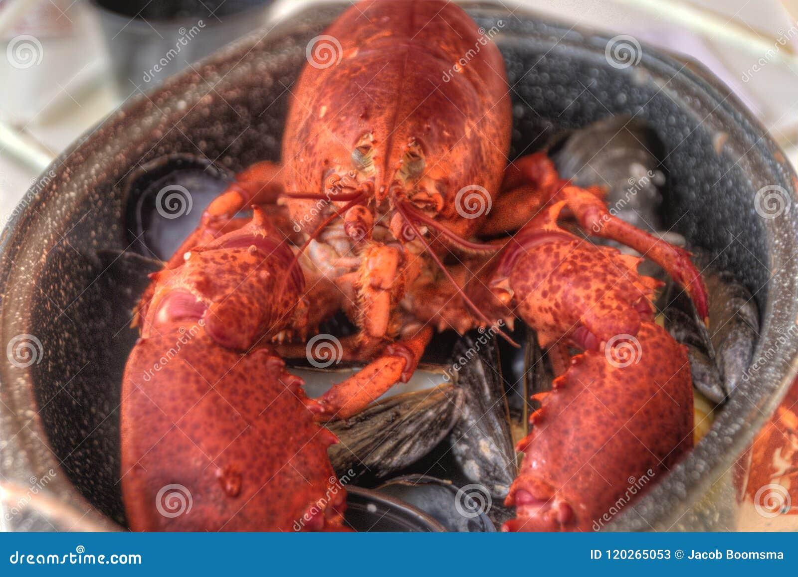 Langosta asada a la parrilla conjunto con los crustáceos del mejillón en un pote