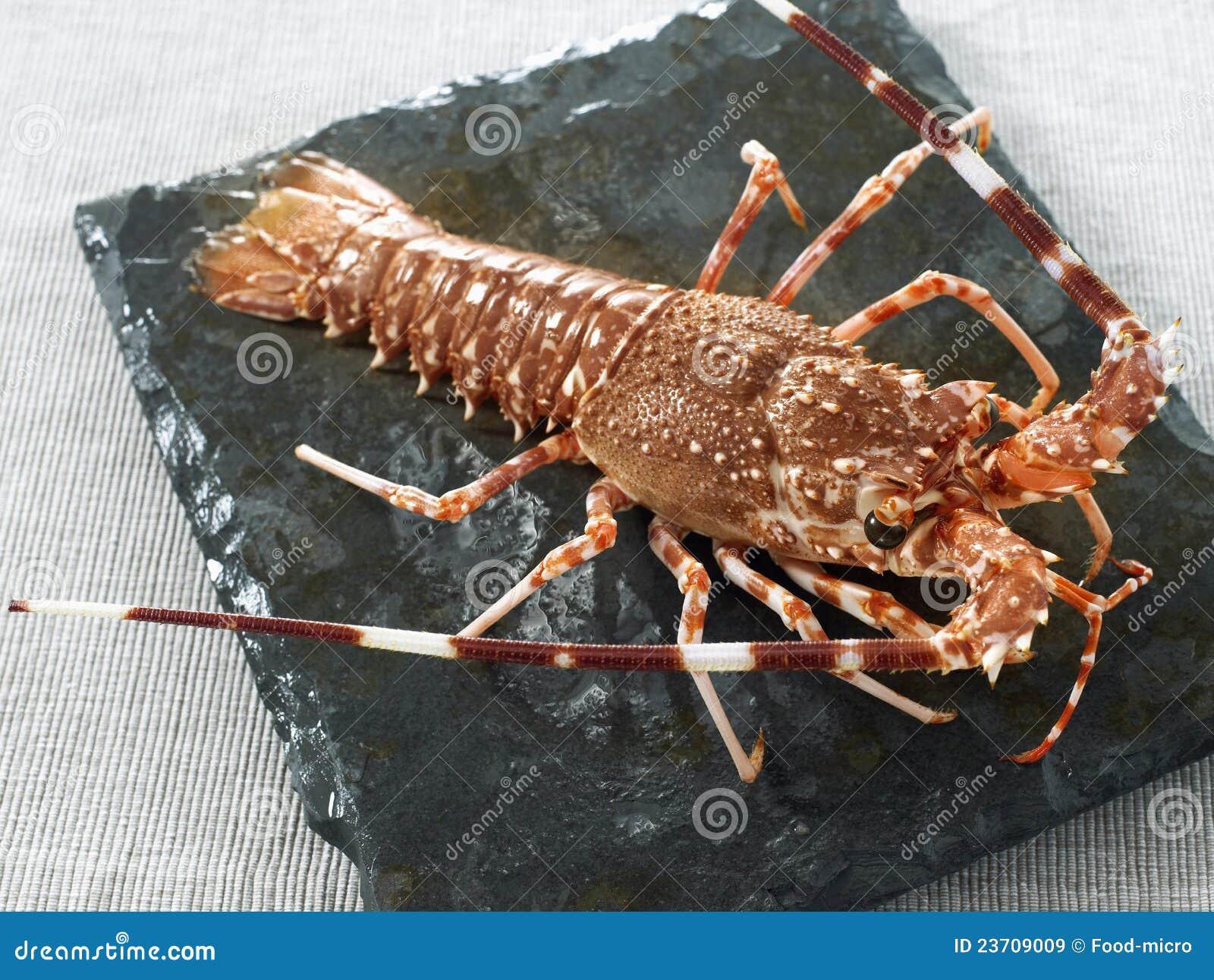 Langouste enti re images libres de droits image 23709009 for Cuisine entiere