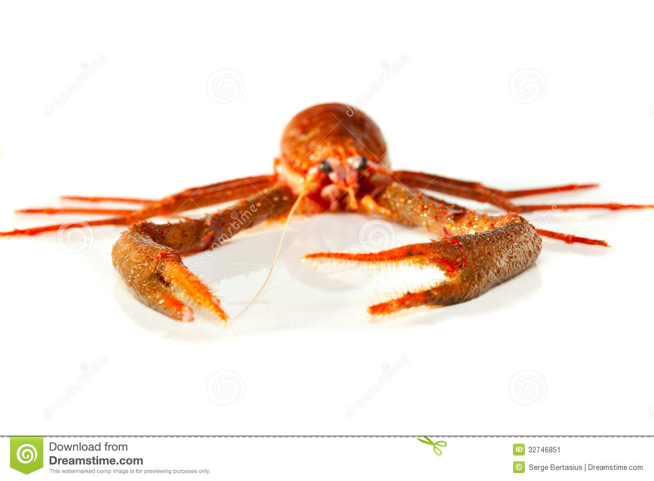 Langoustine stock image. Image of crustacean, claw, spiny - 32746851