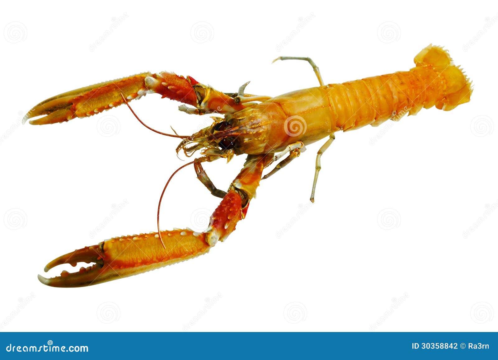 shrimp business plan
