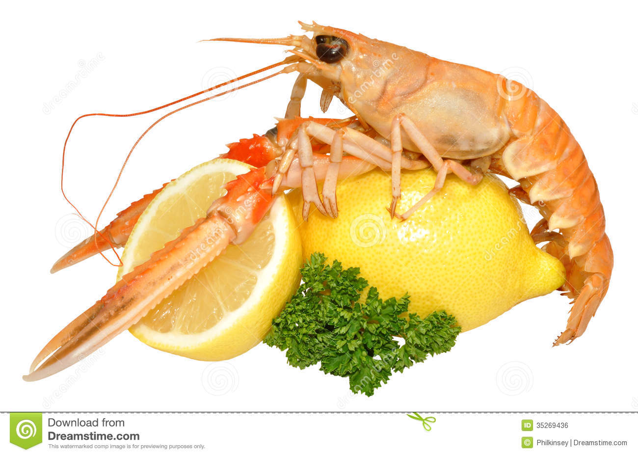 Shrimp business plan