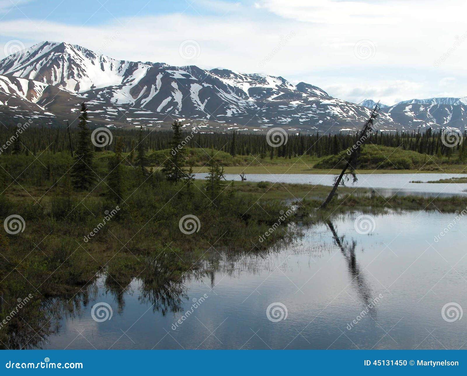 Langs Denali-Weg - Alaska