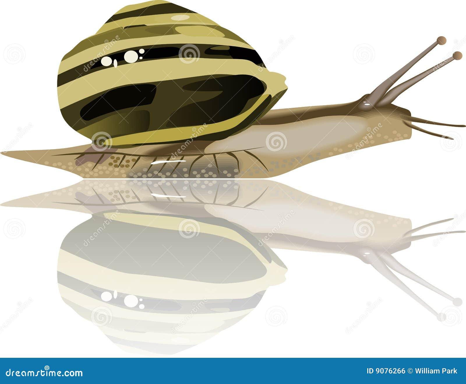 Langsames Shell der Schneckemolluske