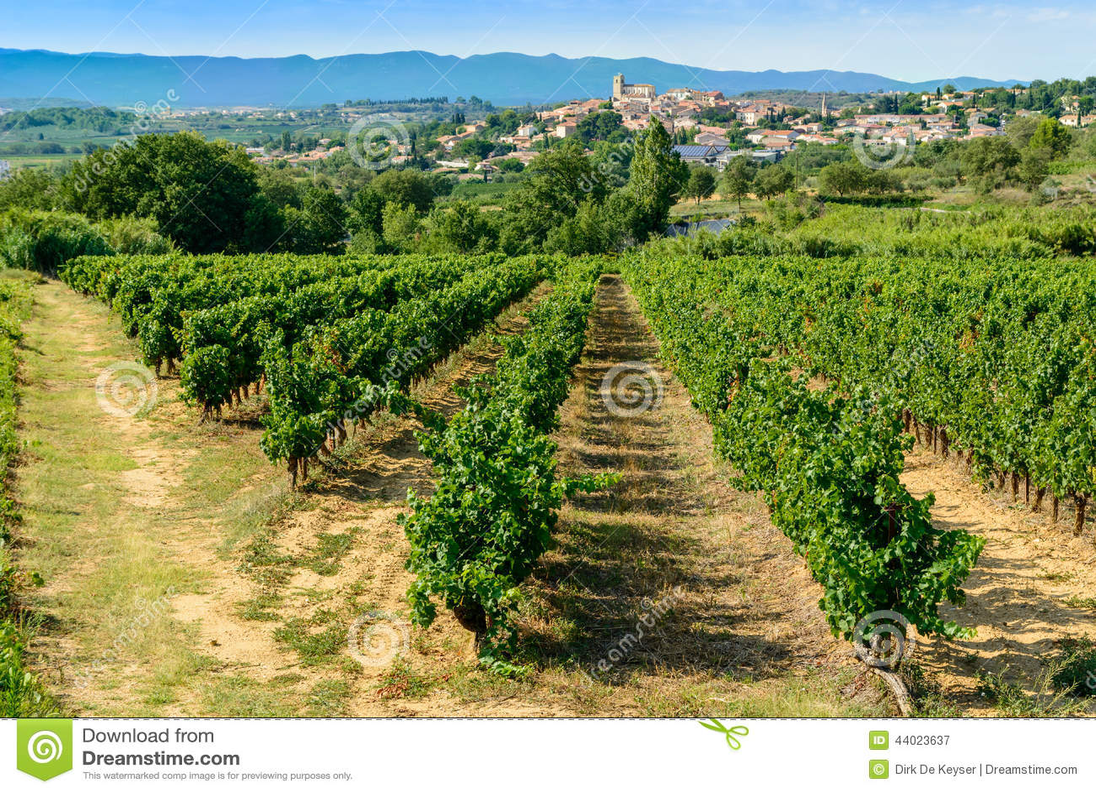 Languedoc vineyards around Beziers Herault France