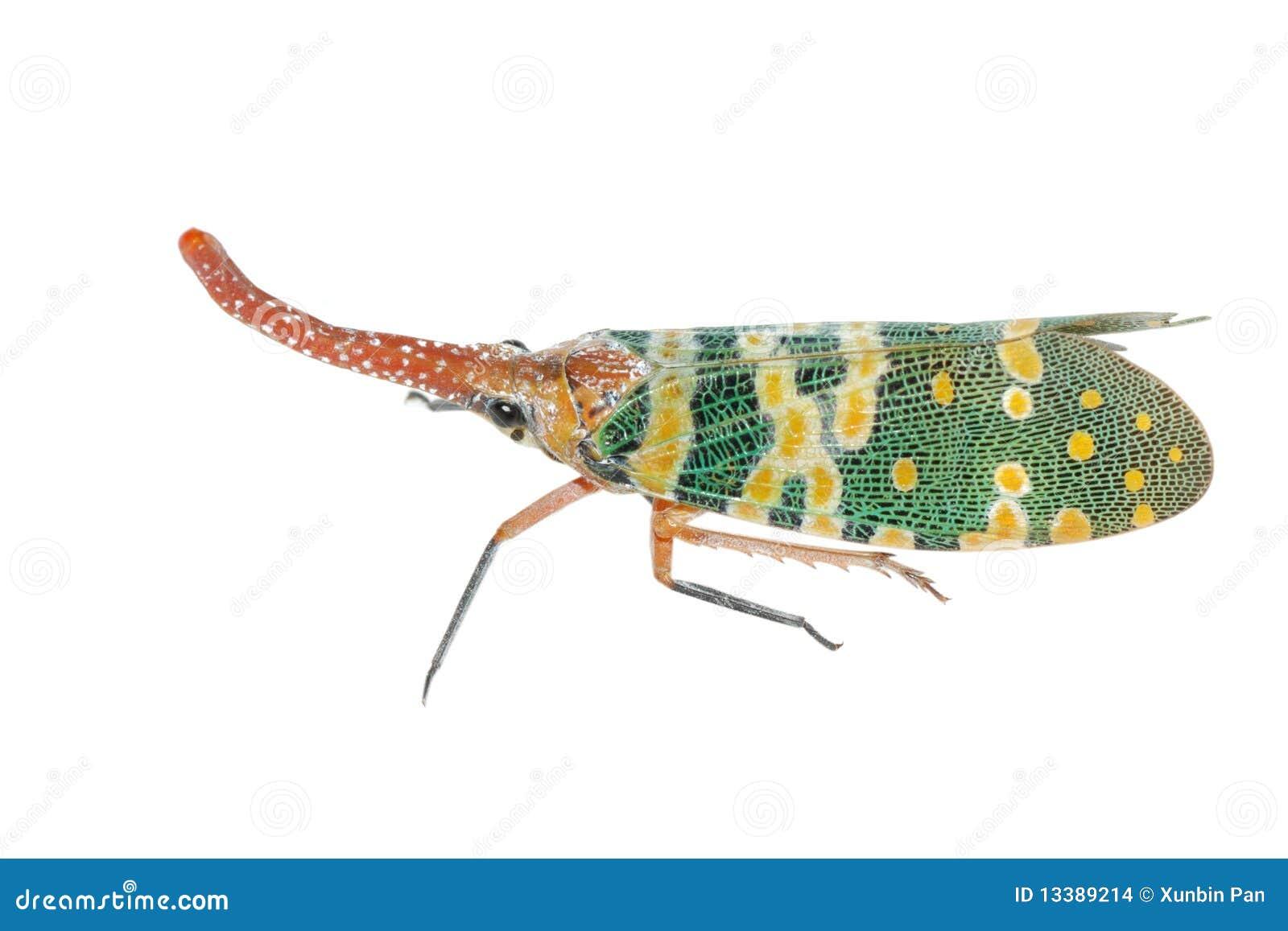 Lantern fly sting bug stock photo. Image of grey, building ... - photo#35
