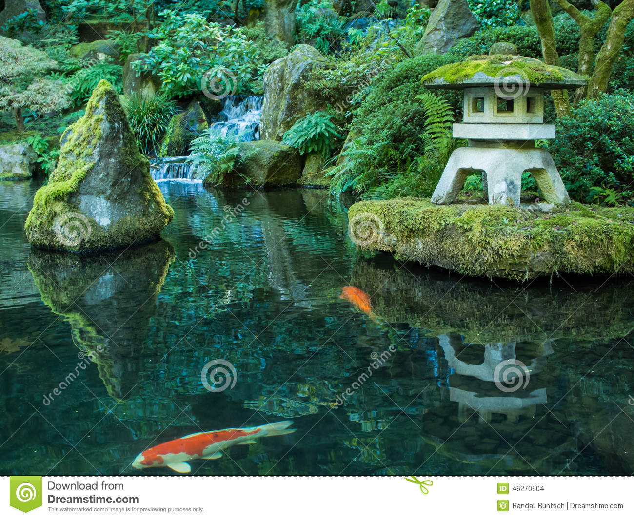 a lantern and koi in the portland japanese garden - Japanese Koi Garden