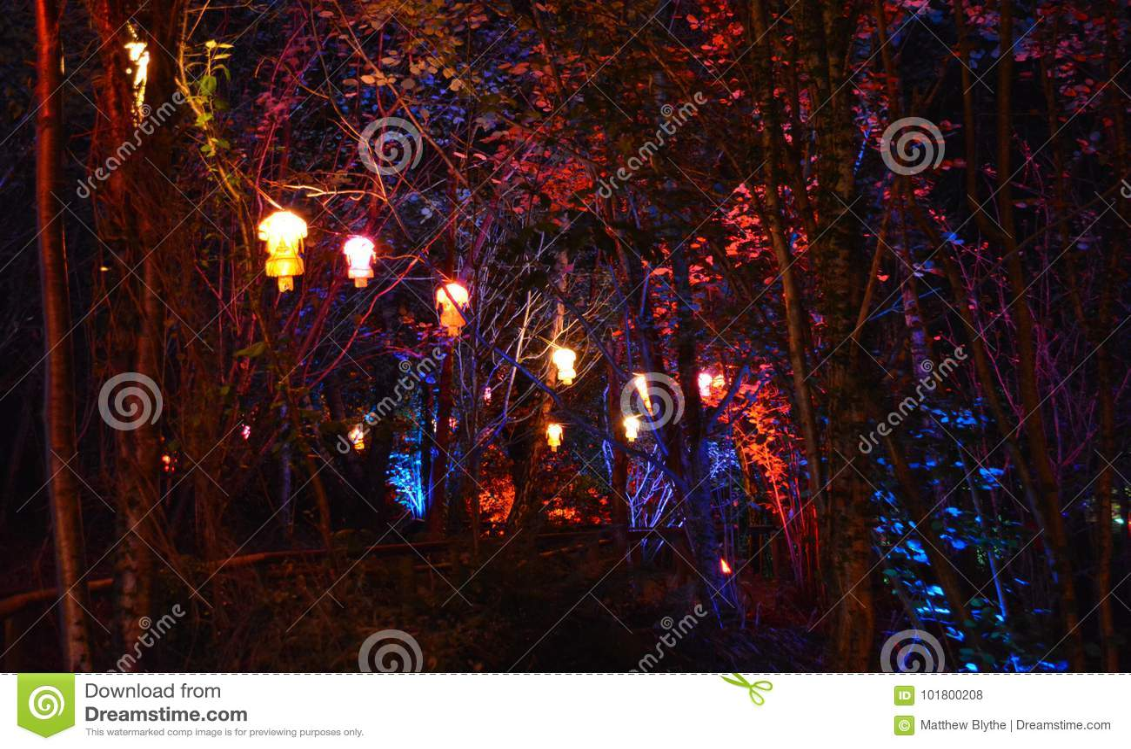 Lanternas e árvores iluminadas
