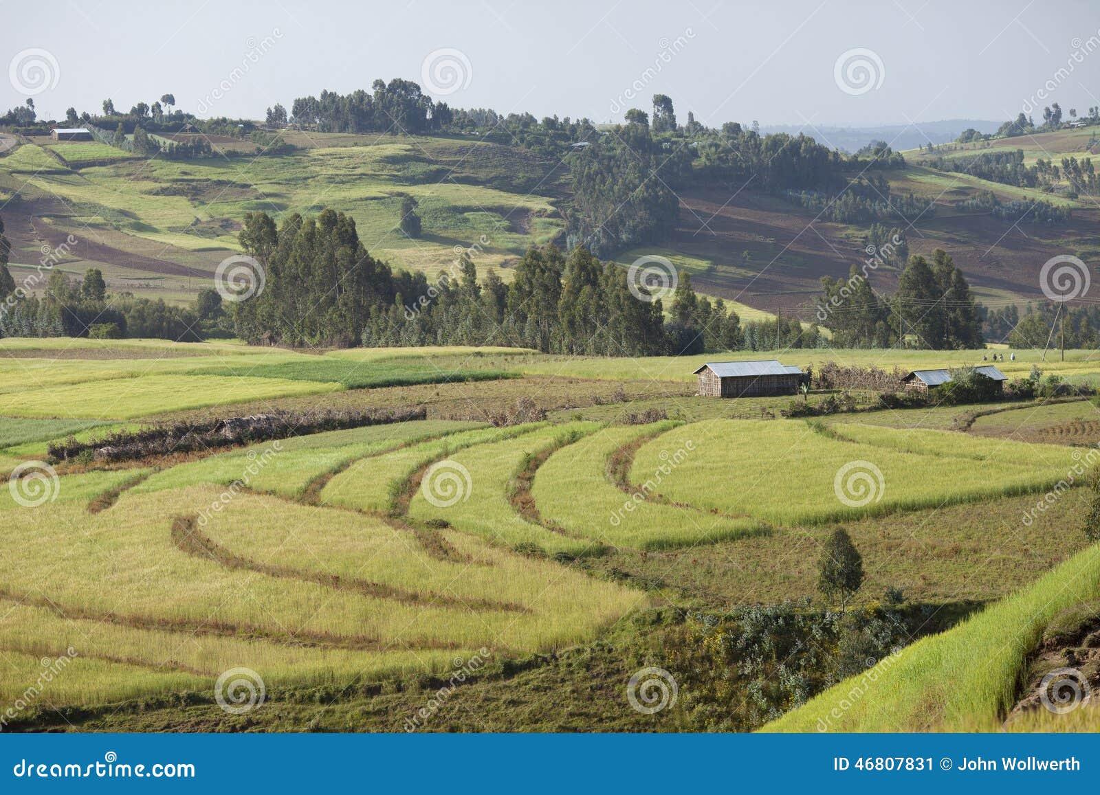 Lantgårdar i etiopiska högländer