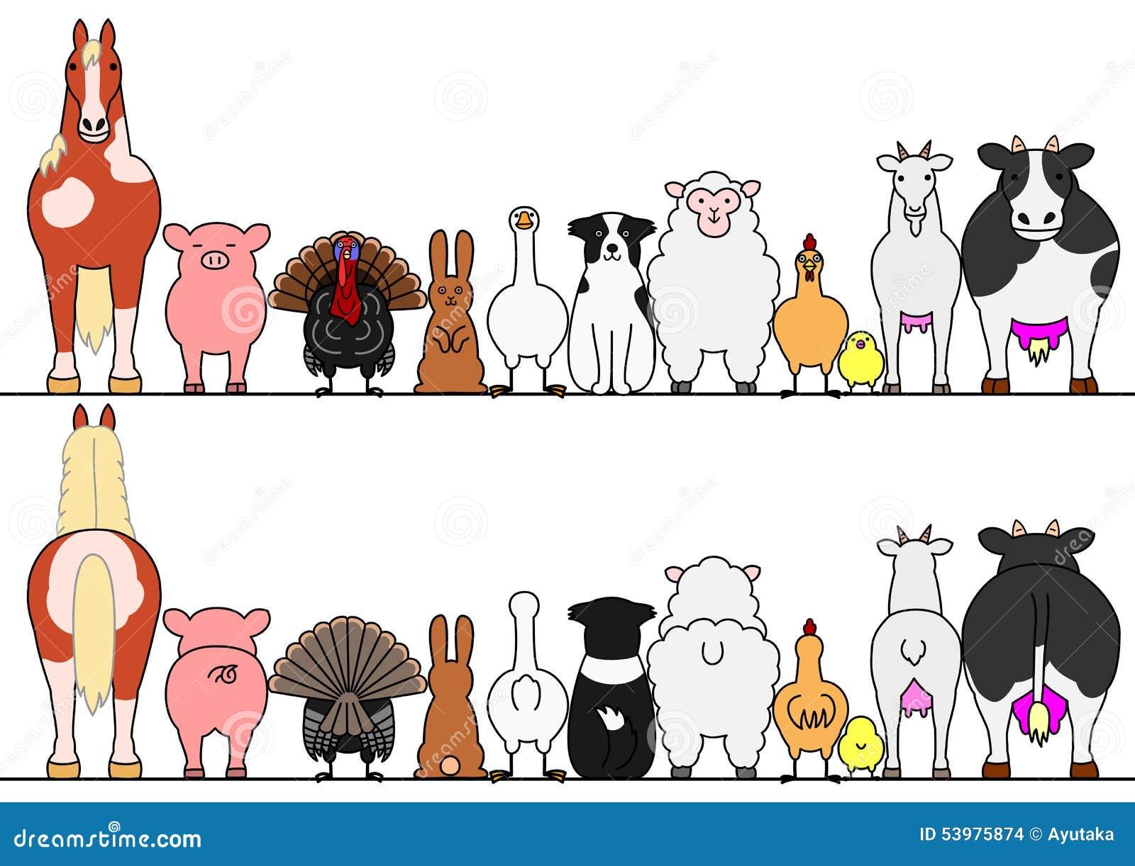 Lantgårddjur i rad, framdel och baksida