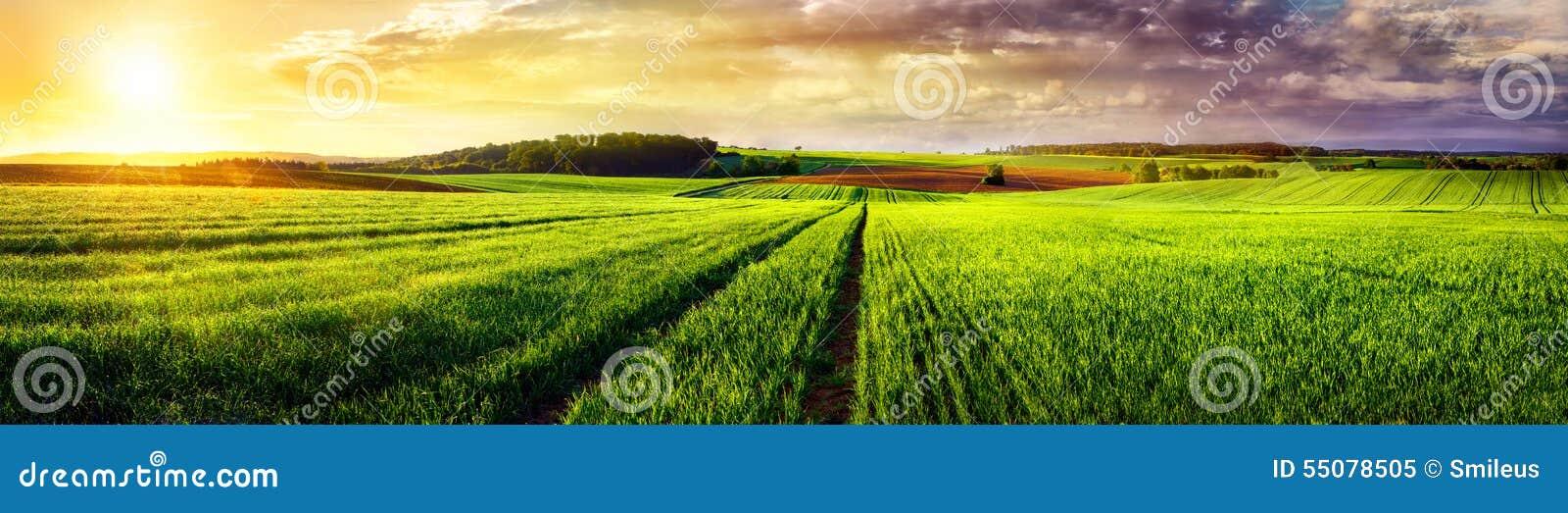 Lantlig landskapsolnedgångpanorama