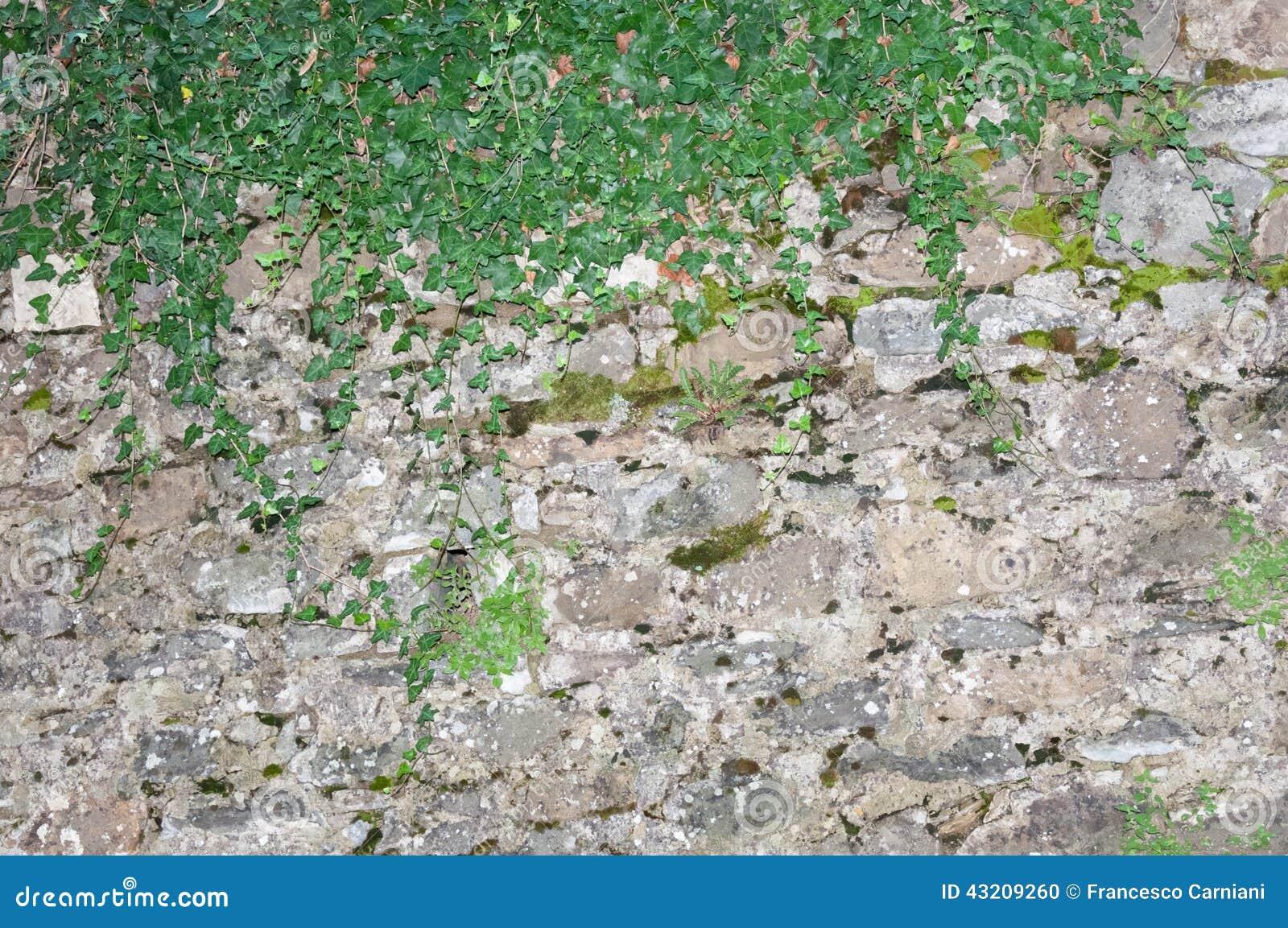 Download Lantlig vägg arkivfoto. Bild av gräns, lantligt, green - 43209260
