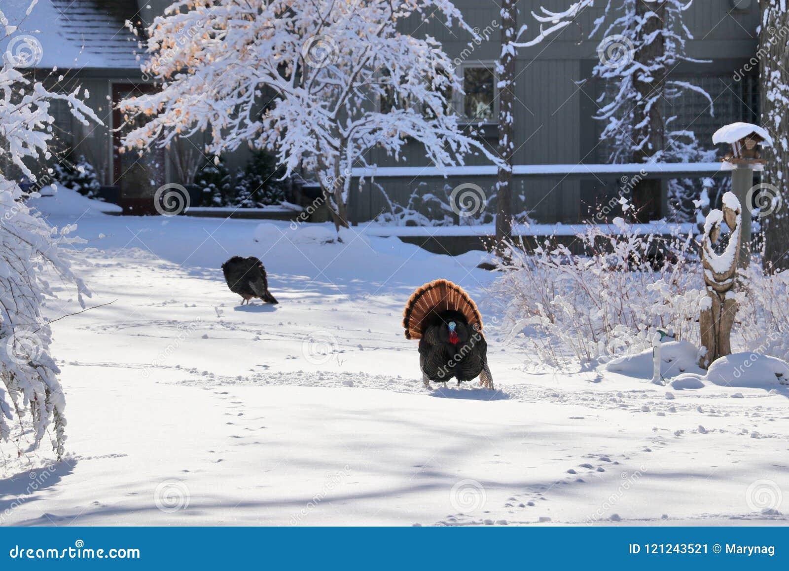 Lantlig vinter för härlig liggande
