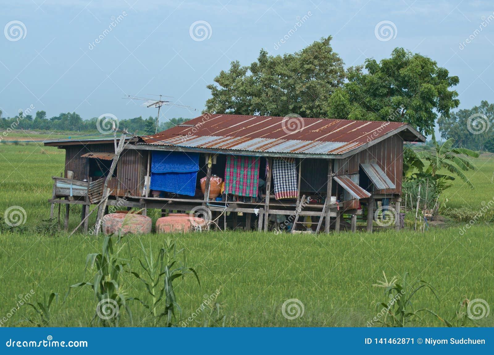 Lantligt hus i risfält i Thailand