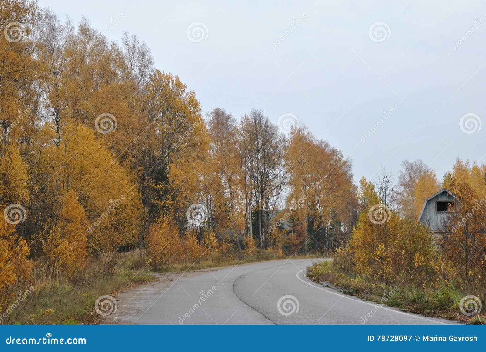 Lantligt landskap för höst: vägen i skogen