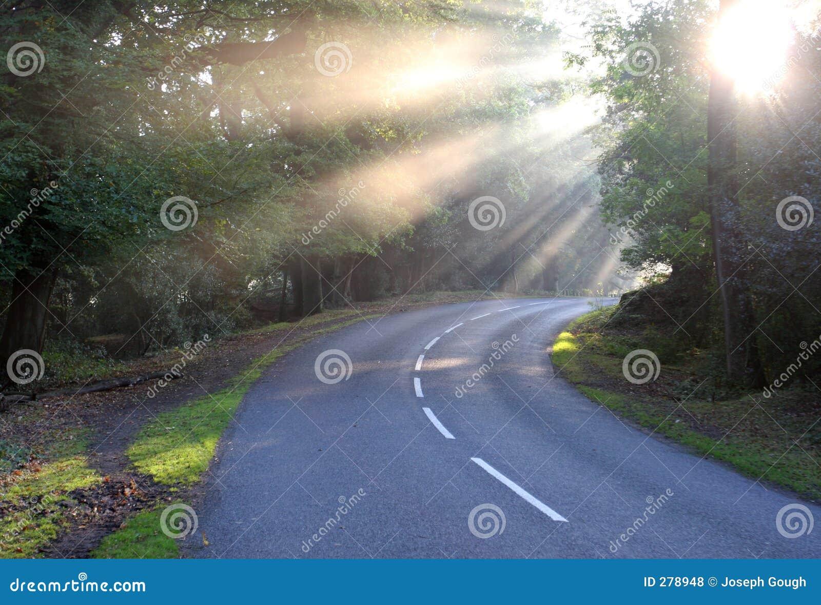 Lantligt solljus för gryningmistväg