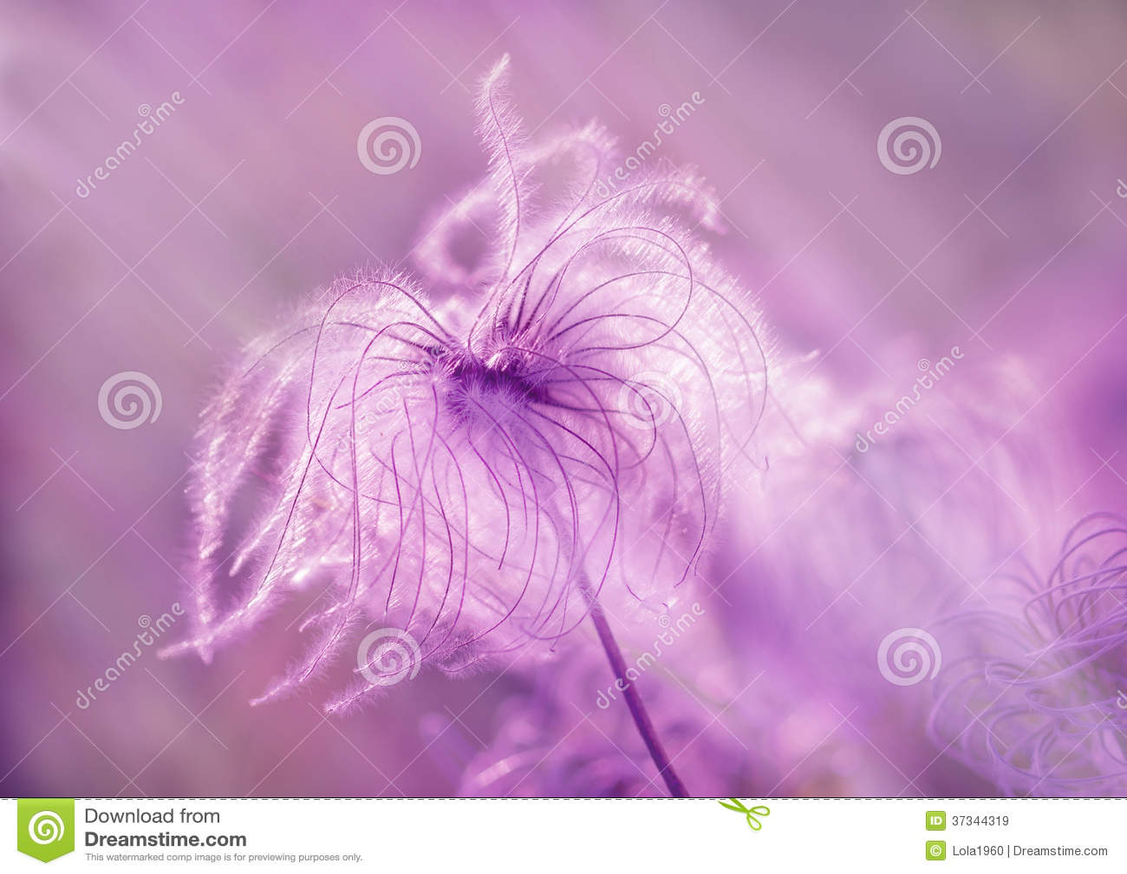 Lanuginoso - fiore di morbidezza