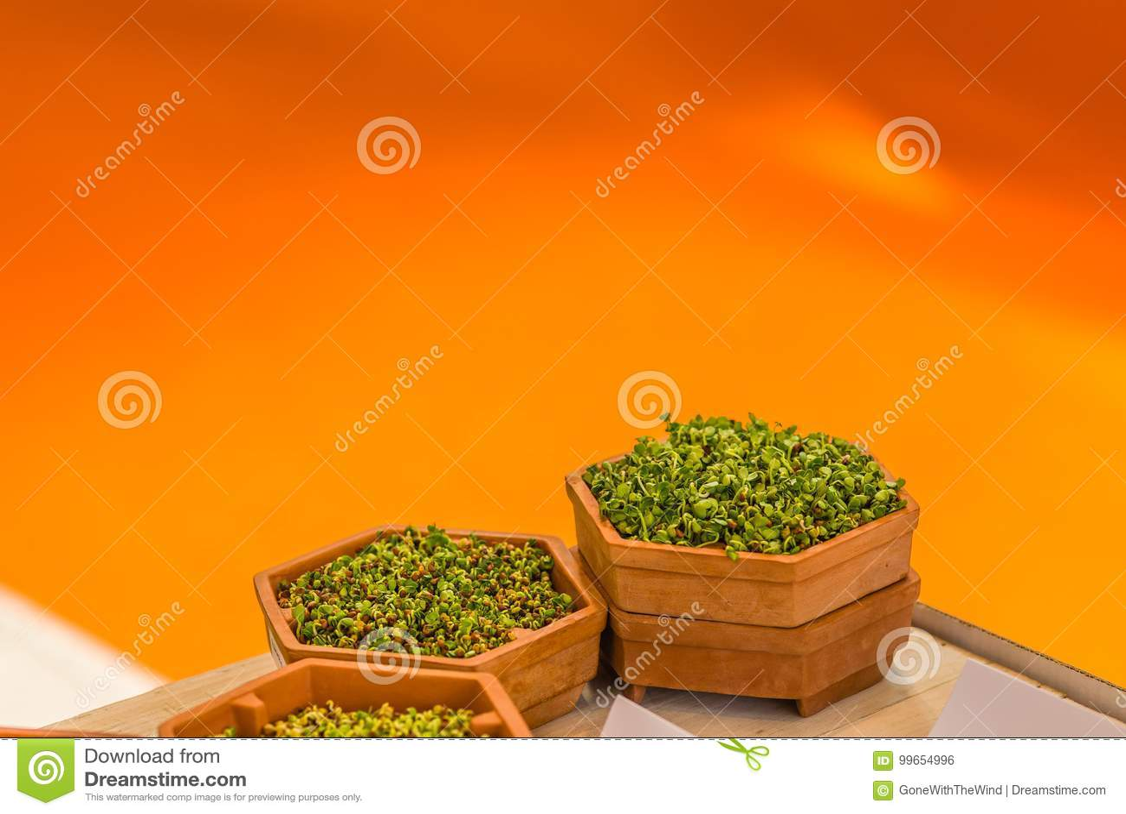 Lanzamientos del verde en potes