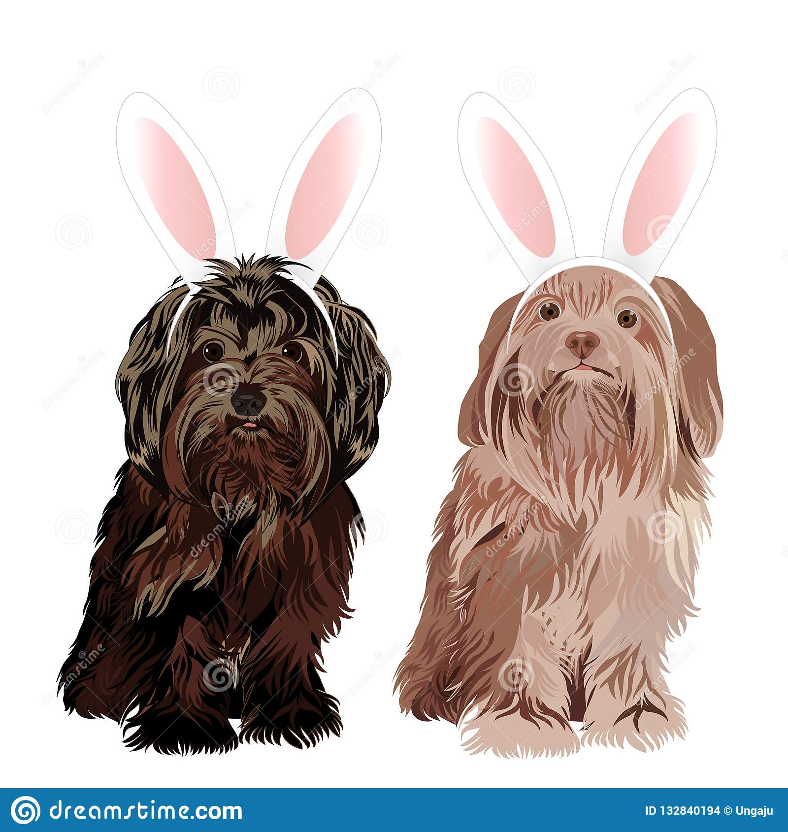 Lap dog dressed with bunny easter ears isolated on white background.