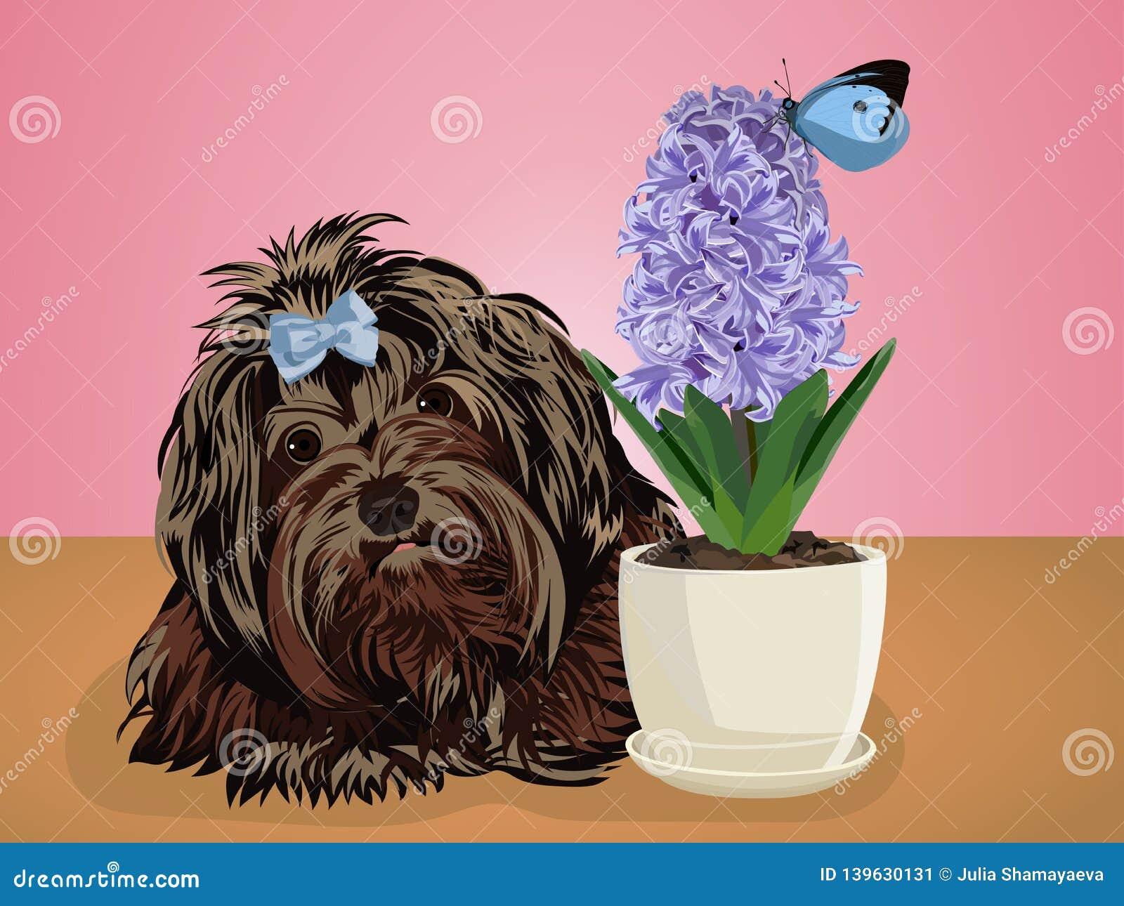 Lap dog little black dog. Vector illustration.