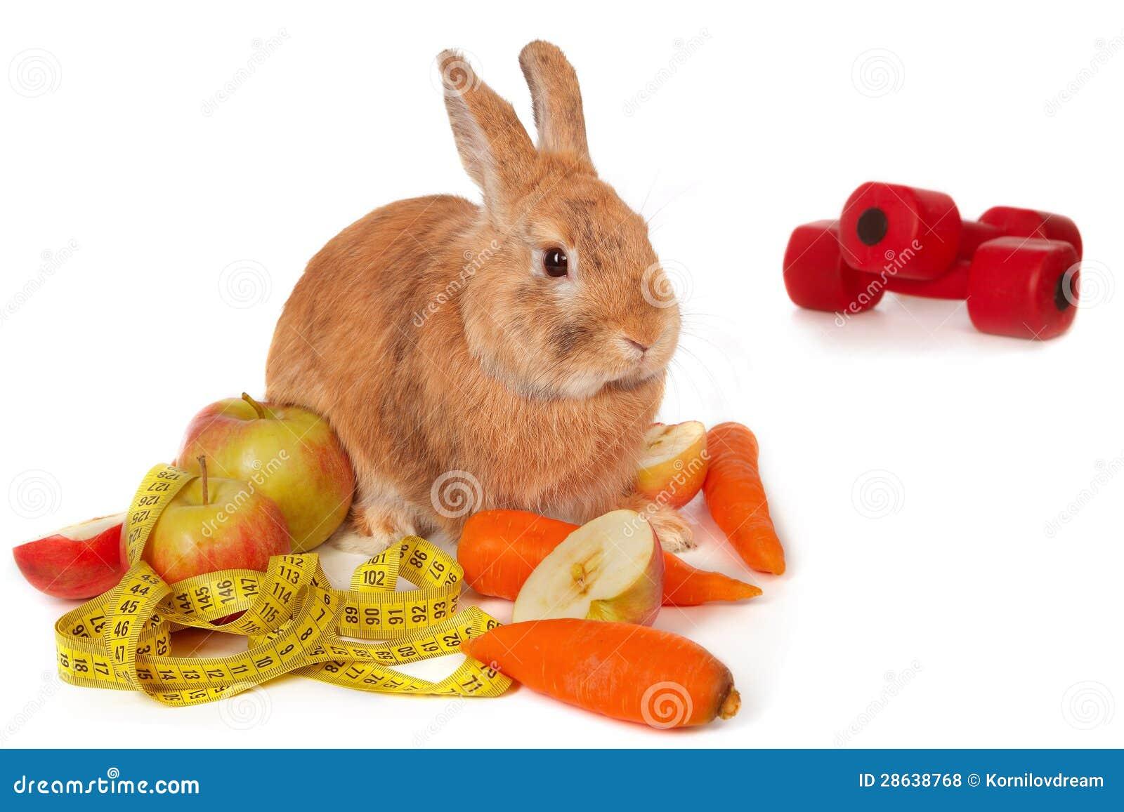 Lapin avec les légumes frais
