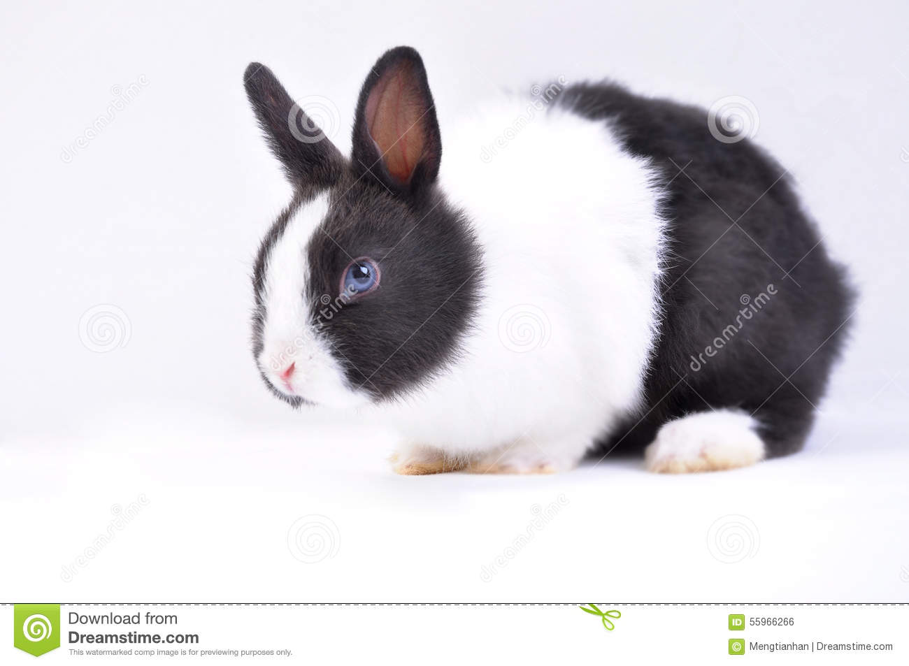 Lapin d animal familier