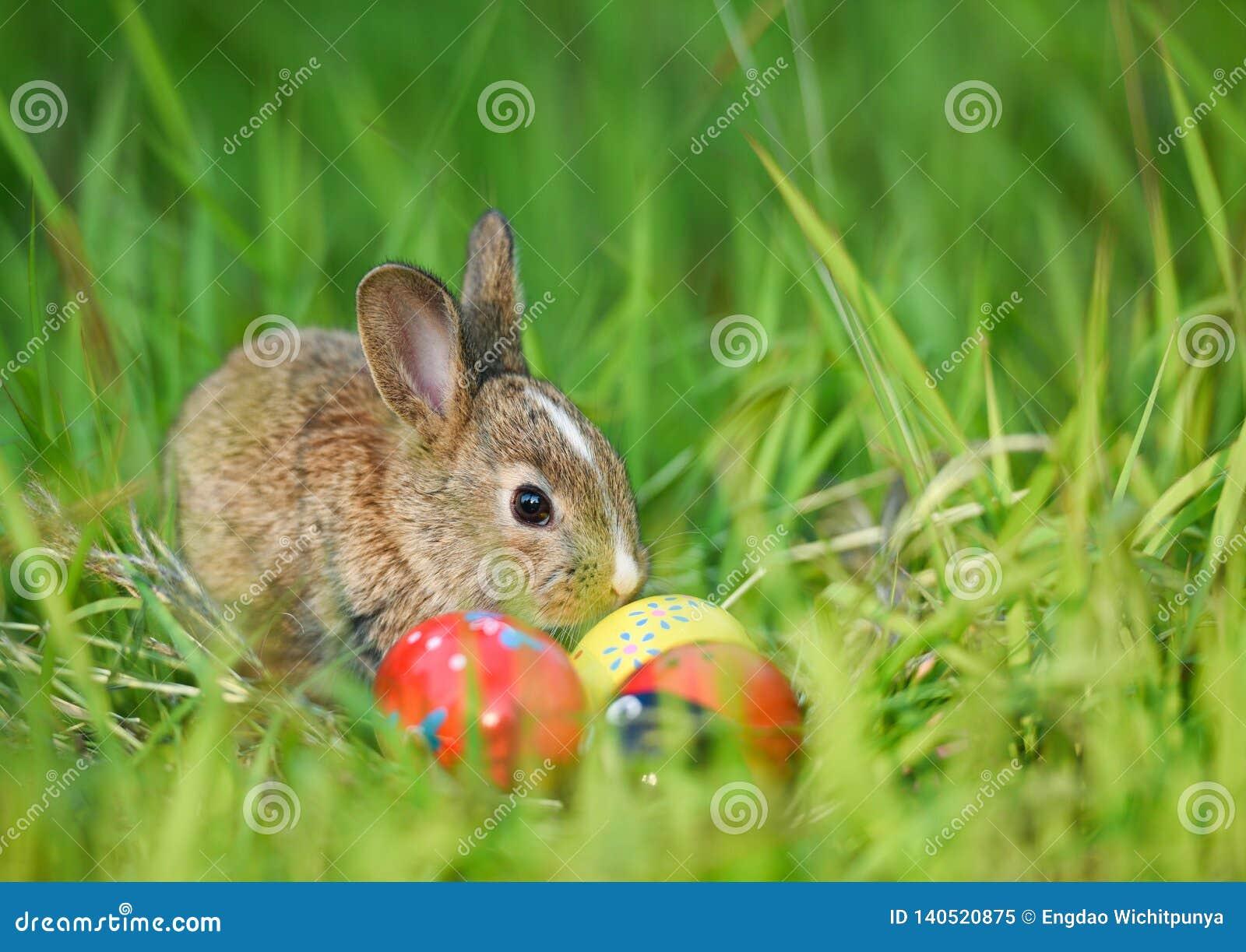 Lapin de Pâques et oeufs de pâques sur séance brune extérieure/petite d herbe verte de lapin