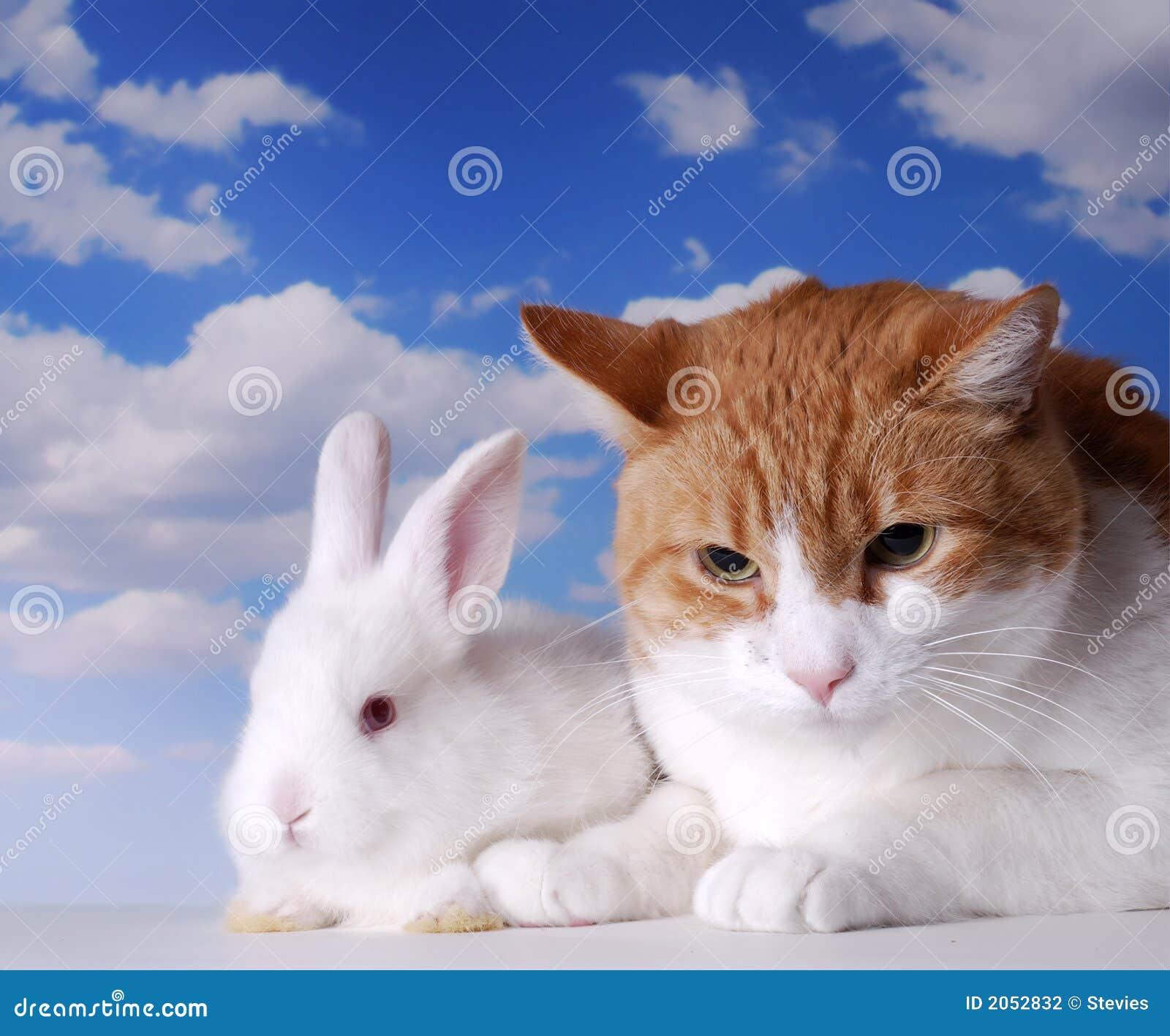 Lapin et chat blancs