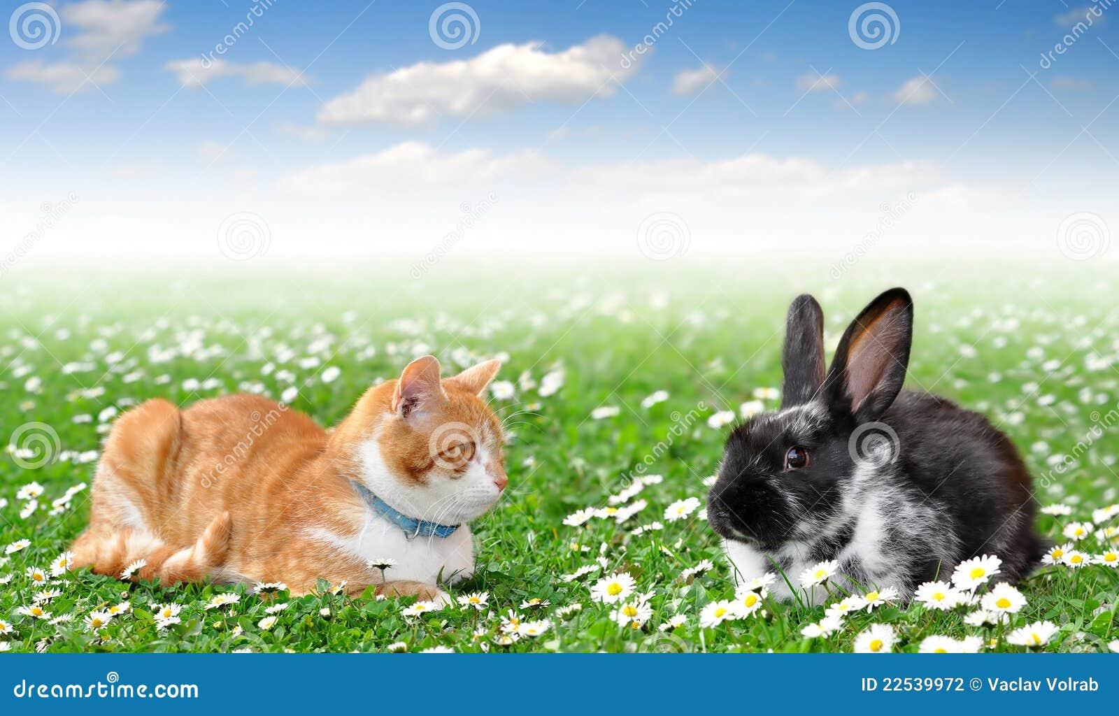 lapin mignon avec le chat photo stock image du amical 22539972. Black Bedroom Furniture Sets. Home Design Ideas