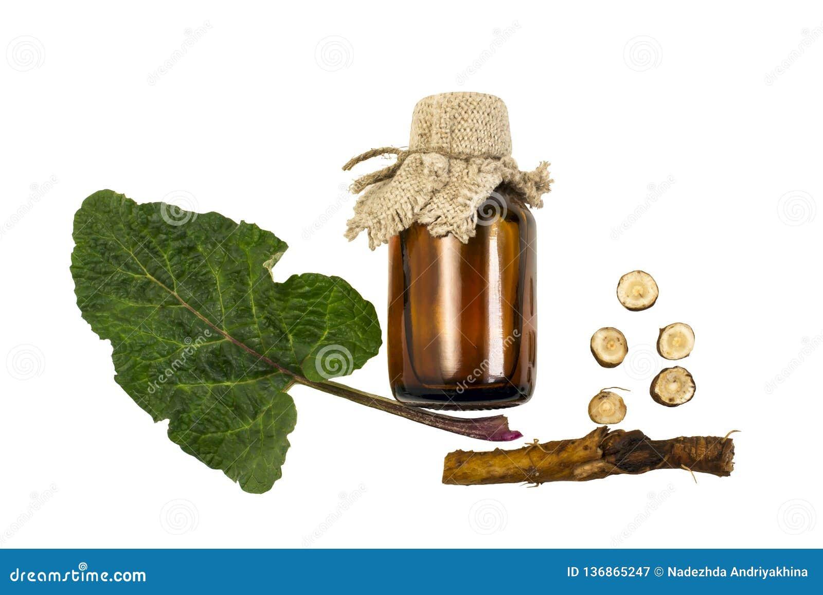Lappa del Arctium de la bardana, hojas y raíz, aceite de la bardana en botella