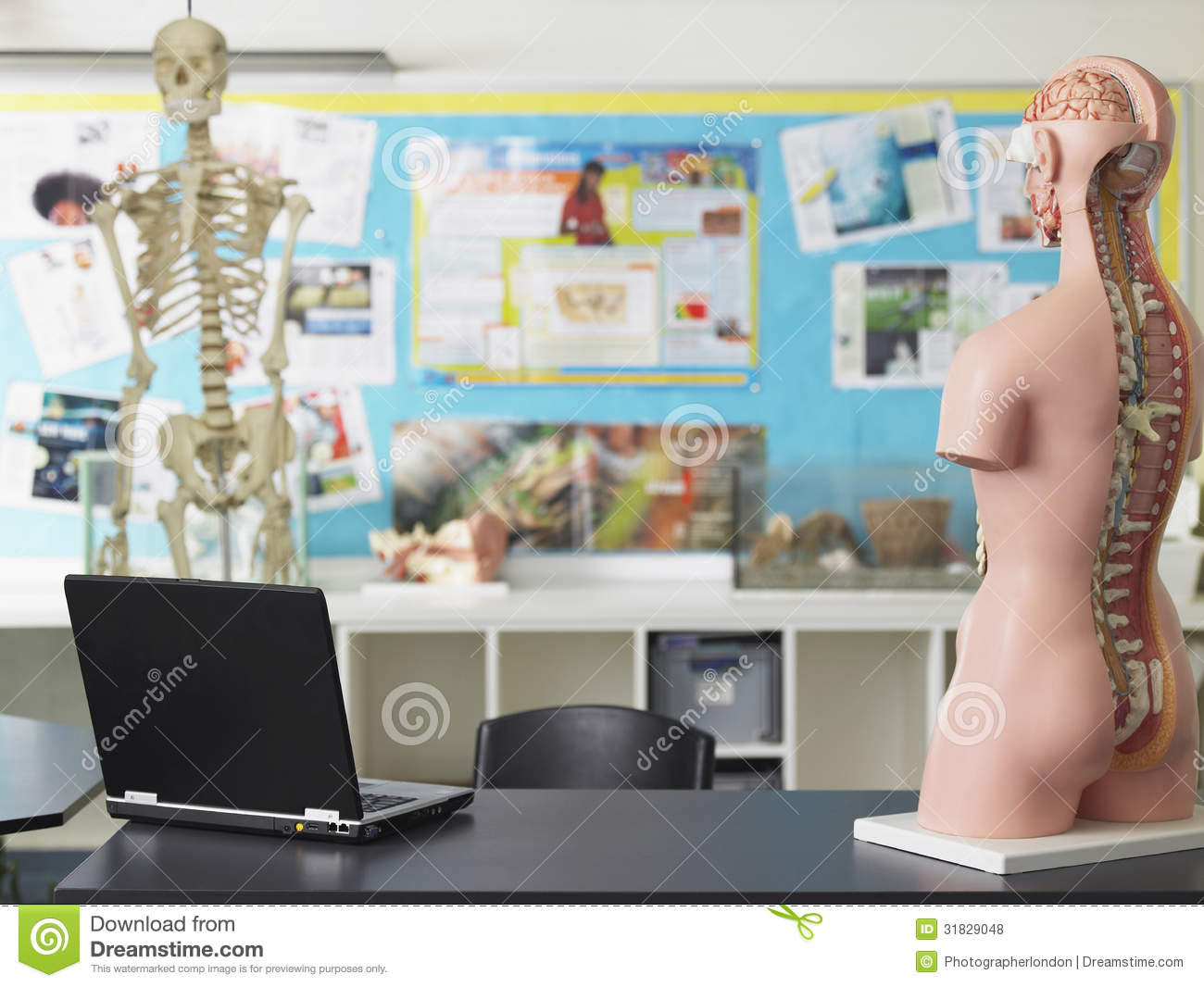Laptop And Anatomical Model In Biology Class