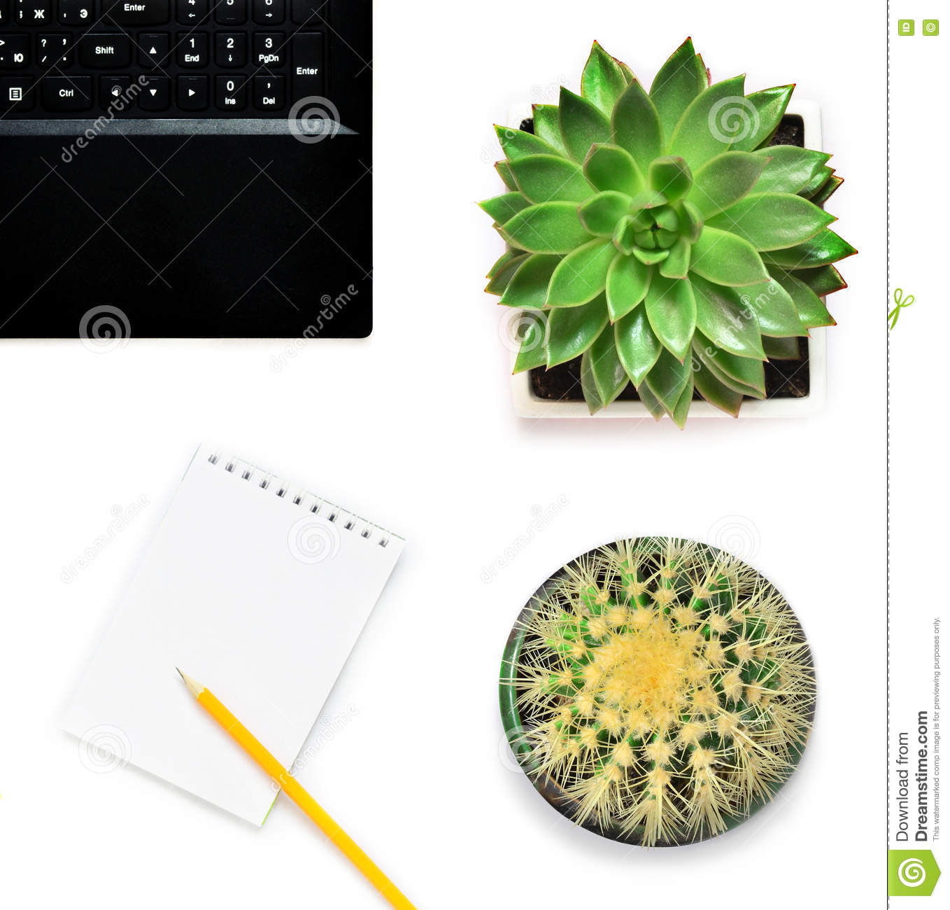 Laptop, flower and cactus in flowerpot on white background