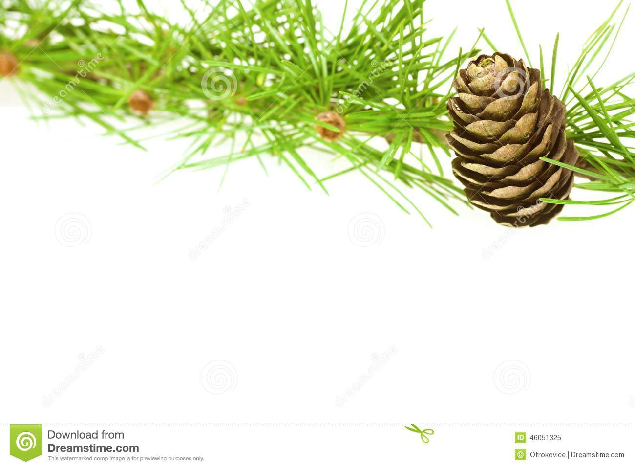 Larch Stock Image. Image Of Fall, Conifer, Festivities