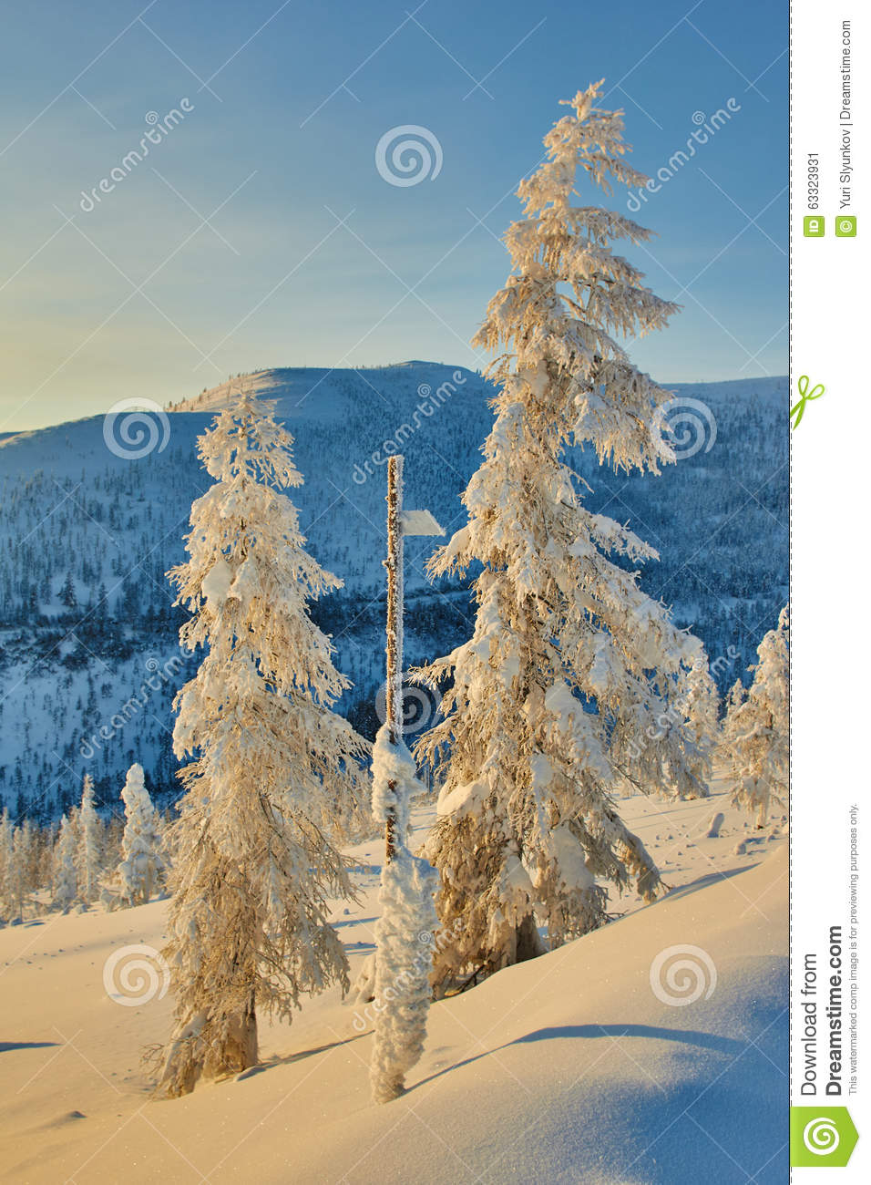 Larch in snow in mountains. Winter. A decline. Evening. Kolyma