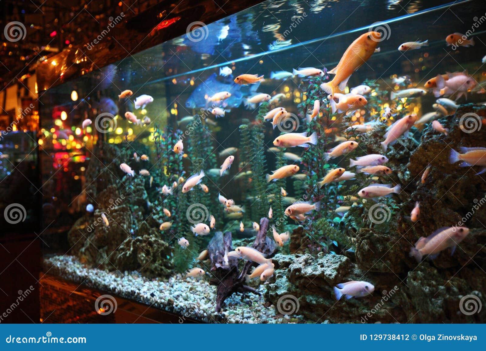 Large aquarium with colorful fish in the interior decor