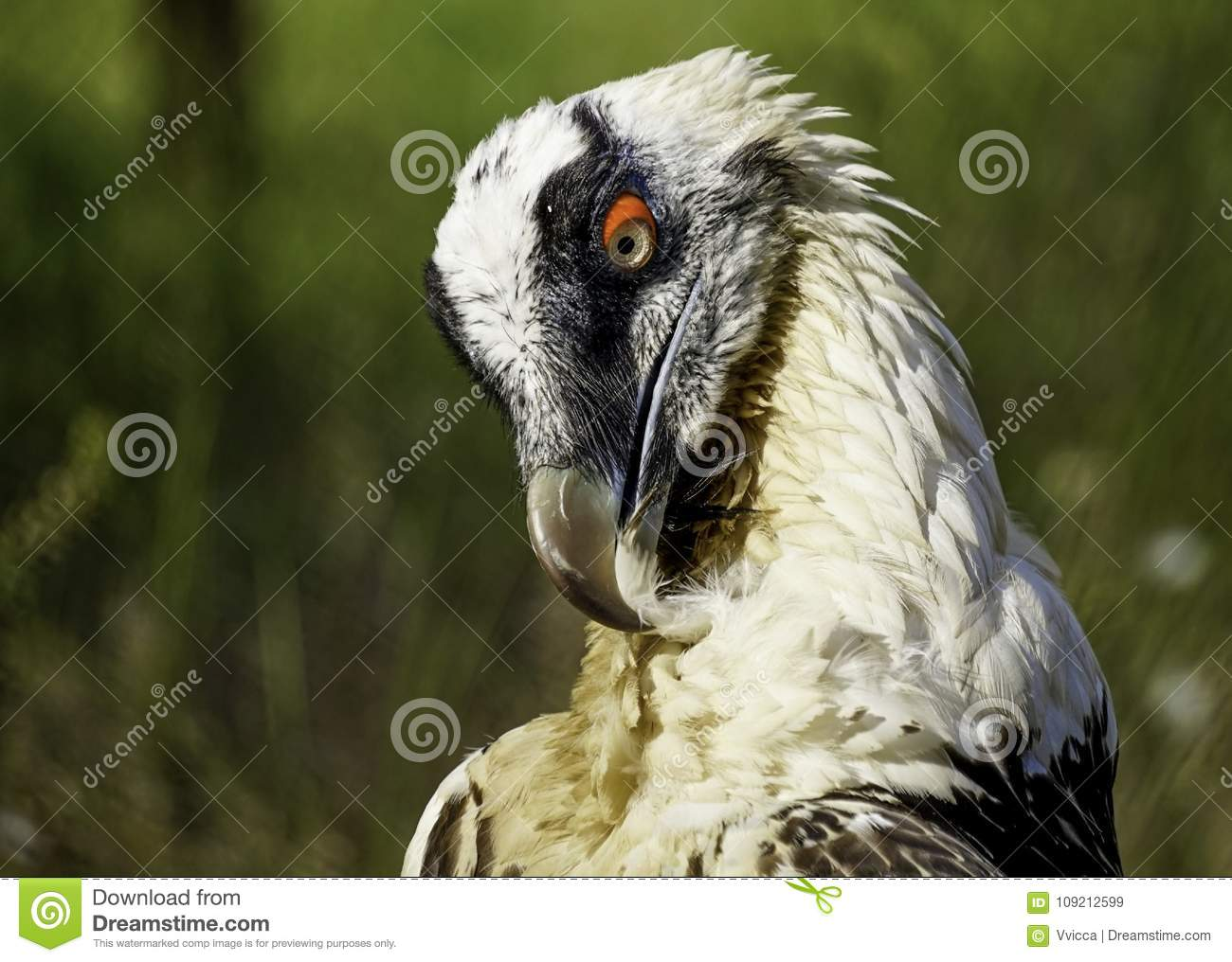 A large bird of prey on a green natural background..
