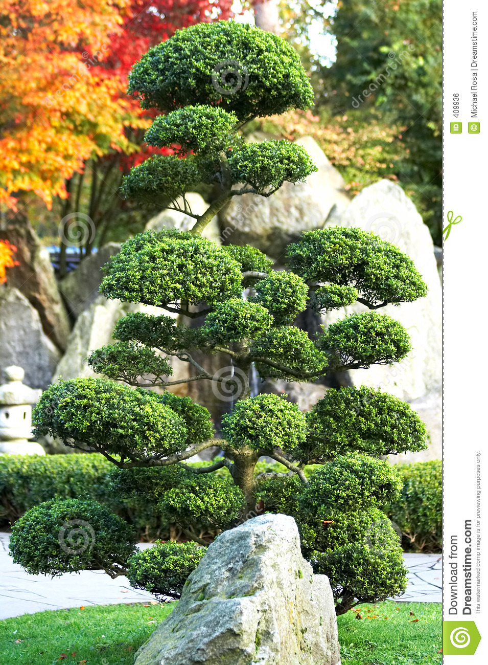 Japanese water garden pink - Large Bonsai Tree With Rock And Waterfall In A Japanese Garden