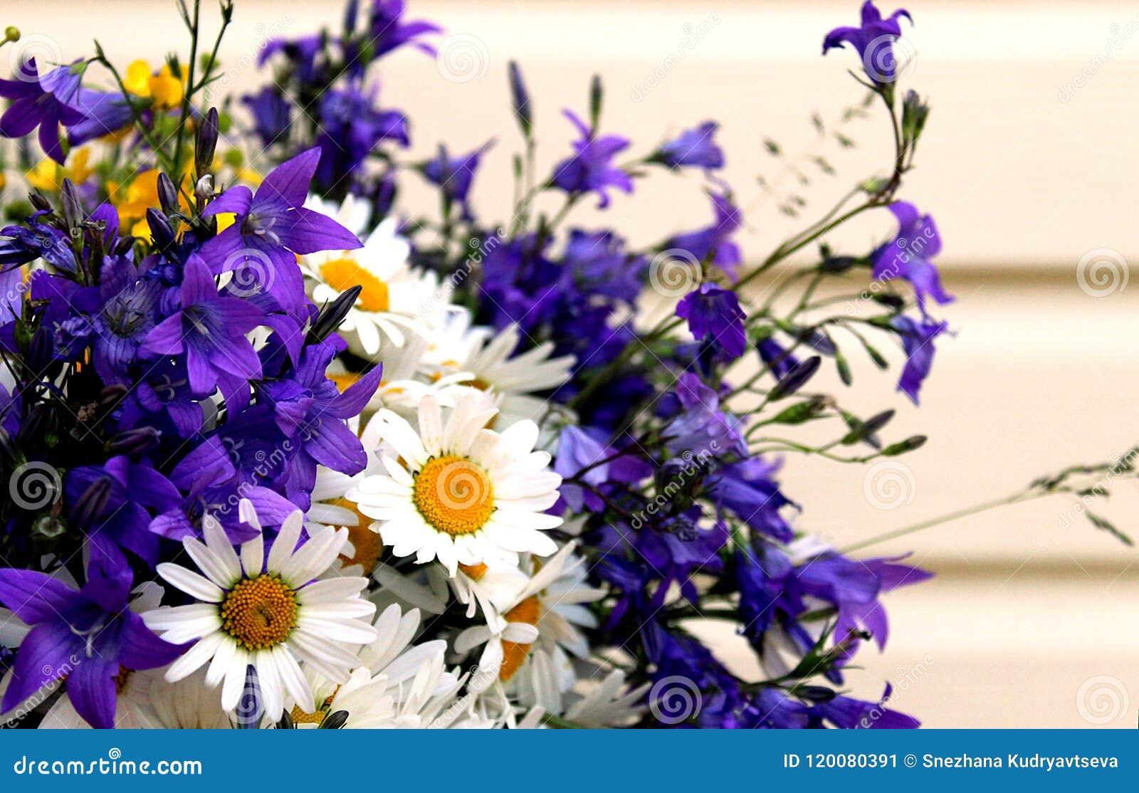 Beautiful Summer Flowers: