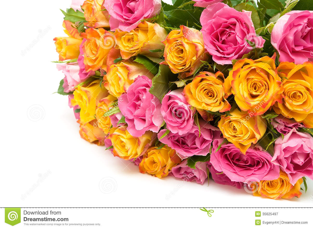 A large bouquet of roses on a white background royalty for Big bouquets of flowers