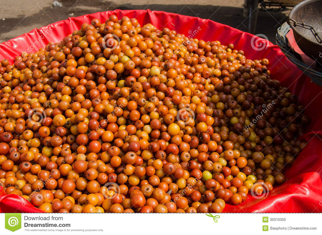 large bowl of ber fruit, ziziphus mauritiana, for sale in a market ...