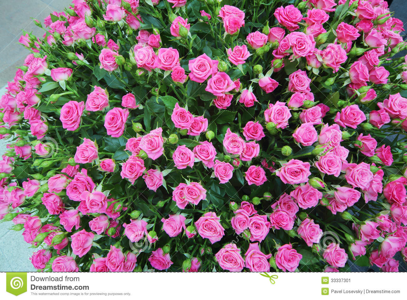Large bright bouquet of freshly cut small roses stock image image