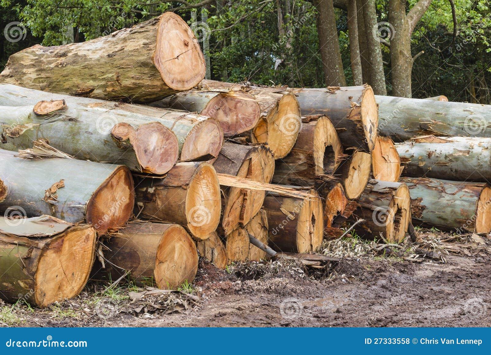 Cut Wood Logs ~ Large cut tree logs stock photo image of bark wood