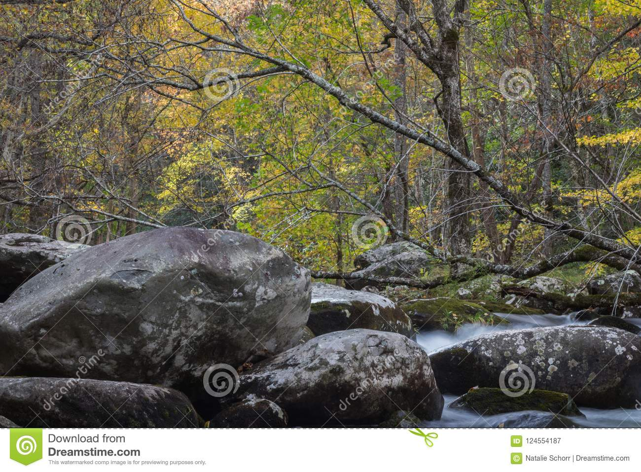 Large deadfall tree top across a stream with large rocks in an autumn landscape