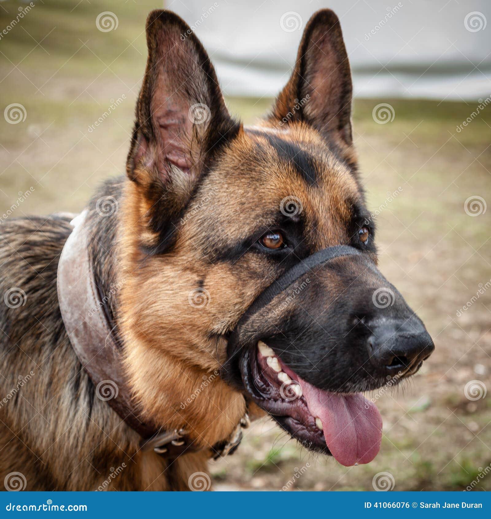 Types Of Dog Head Collars