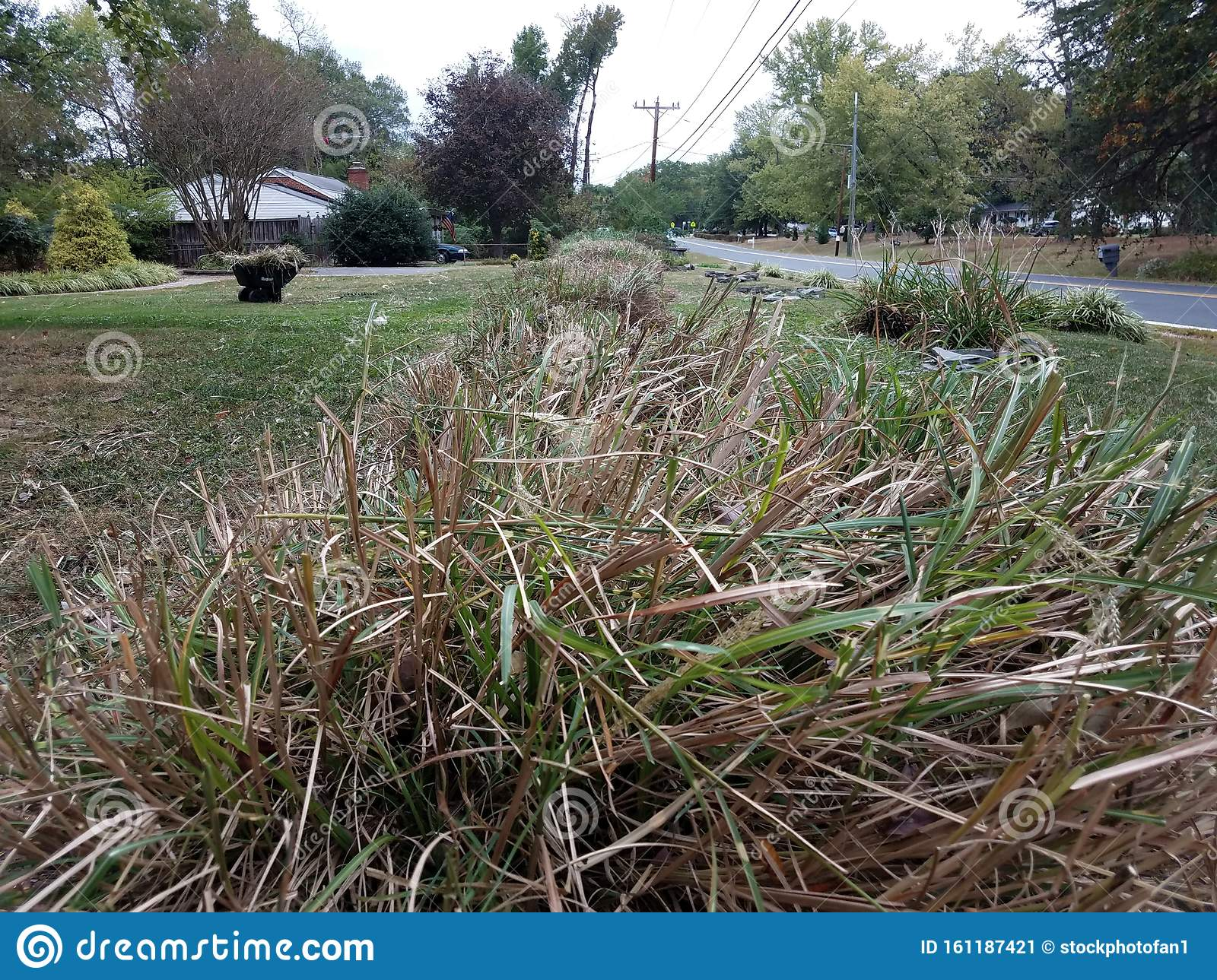 Large Grasses Cut Or Trimmed In Lawn Or Yard Stock Image Image