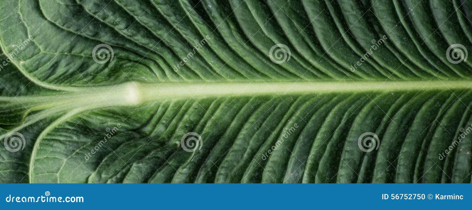 Large Green Plant Leaf Stock Photo Image 56752750