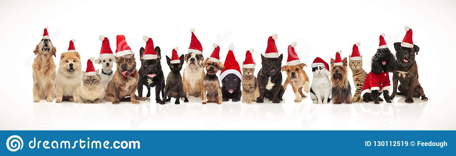 Large group of adorable cats and dogs with santa hats