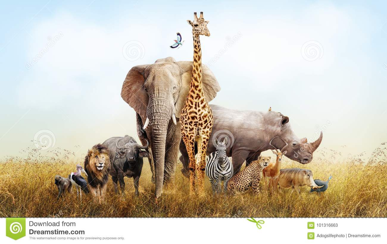Group of wild animals together - photo#41
