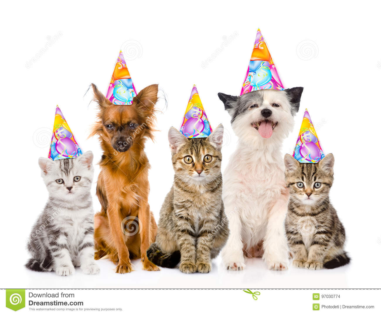 Large Group Cats And Dogs In Birthday Hats Isolated On White